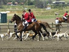 Santa Fe Hounds