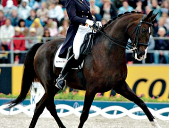 2008 Dressage Olympic Medal Contenders