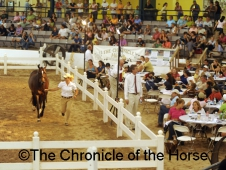 American Hunter Pony Classic Auction