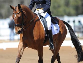 2010 Red Hills International Horse Trials Dressage