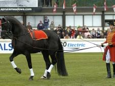 Celle Stallions