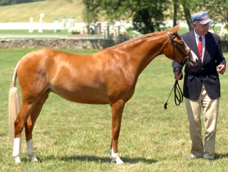 2010 Upperville Horse Show Saturday