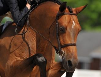 2011 Devon Junior Ponies Day 2