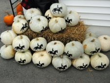 Devon Pumpkins
