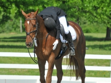 Katie Ruppel on Sir Donovan