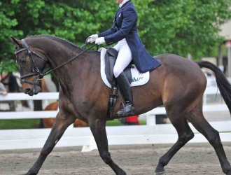 2011 Jersey Fresh CIC*** and CCI** dressage