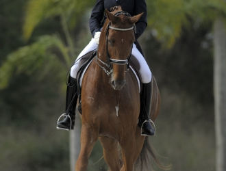 2011 Palm Beach Dressage Derby Friday