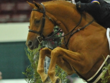 "Peter Pletcher won the <a href=""http://www.chronofhorse.com/article/pletcher-named-wchr-proffessional-national-champion"">WCHR Professional Rider Challenge.</a>"