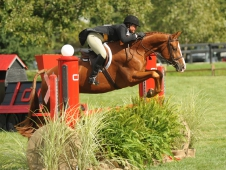 "Jersey Boy Wins At The <a href=""http://www.chronofhorse.com/2012chicagohunterderby"">Chicago Hunter Derby.</a>"