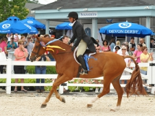 "Jersey Boy Tops The <a href=""http://www.chronofhorse.com/article/jersey-boy-wears-devon-blue-again"">Devon Hunter Derby.</a>"