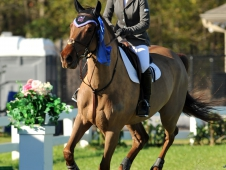 "Frances Land and Merlin Win <a href=""http://www.chronofhorse.com/article/land-leads-victory-gallop-35000-johnson-horse-transportation-grand-prix"">Gulf Coast Magnolia Classic IV Grand Prix</a>"