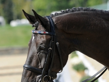 Van The Man's Browband