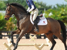 Cavaletti Are The Bridge From Flatwork To Jumping