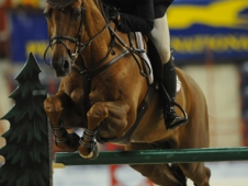 McLain Ward and Wings