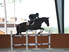 "Will Faudree and Andromaque Tackle A <a href=""http://www.chronofhorse.com/article/learning-new-languages-usef-high-performance-eventing-training-sess"">High Performance Training Session</a> Jumping Exercise"