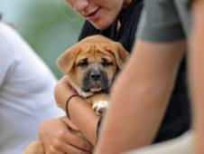 Pouty Puppy