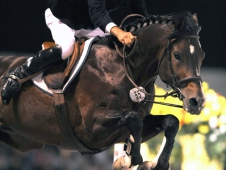 David Beisel on Ammeretto