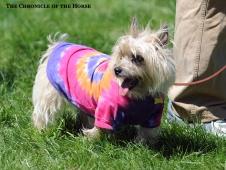Tye Dye Doggie