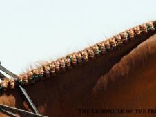 Nice braids!