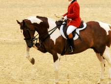 Foxhunting Demonstration