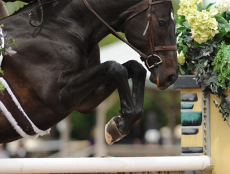 2015 $50,000 USHJA International Hunter Derby at the Winter Equestrian Festival
