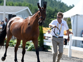 2015 Pan American Games - Eventing Second Horse Inspection