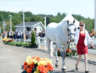 2015 Pan American Games-First Eventing Horse Inspection