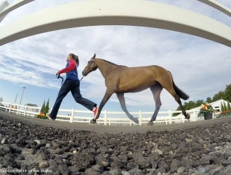 2015 Pan American Games Second Show Jumping Jog