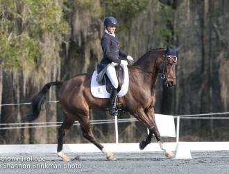 2015 Red Hills Horse Trials - Dressage