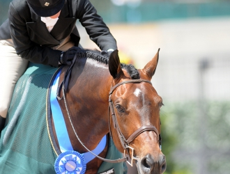 2015 Tryon $50,000 WCHR Open Hunter Classic