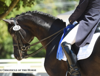 2015 USEF Young Horse, Developing Horse And Festival Of Champions-Friday