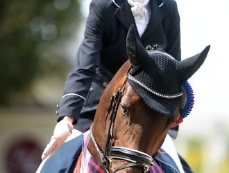 2015 USEF Young Horse, Developing Horse And Festival Of Champions-Saturday