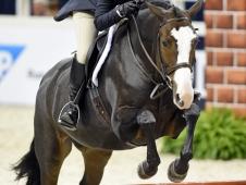 Washington International Horse Show Children's Hunter Championship Winner