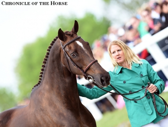2016 Rolex Kentucky CCI**** Second Jog