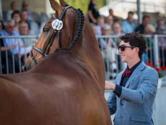 2017 Luhmühlen CCI**** First Horse Inspection