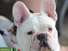 *DSC_7047_Bulldog