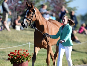 2017 NAJYRC Final Horse Inspection