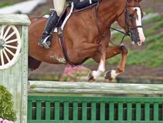2017 Platinum Performance USHJA Green Hunter Incentive Championship