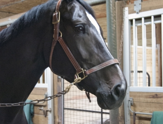 Behind The Stall Door With: Carla