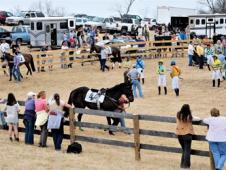 Maiden Hurdle Horses