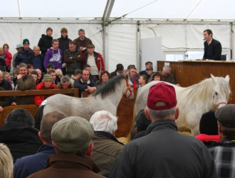 Clifden Connemara Pony Sale