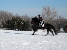 Unconventional Dressage Training