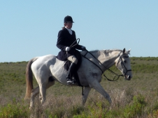 "Riding Danny <a href=""http://www.chronofhorse.com/article/foxhunting-down-under-life-lessons"">Down Under</a>"