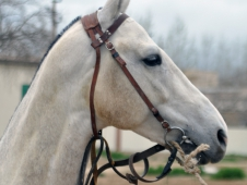 "<a href=""http://www.chronofhorse.com/turkmenistan-akhal-teke"">Turkmenistan: Land Of The Akhal Teke</a>"