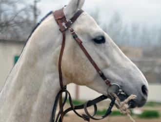 Horses In Turkmenistan