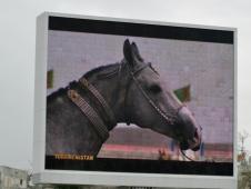Horse Monitor