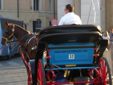 Carriage Horse In Front Of The Vatican