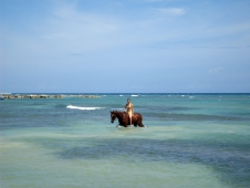 Swimming Horses In Jamaica