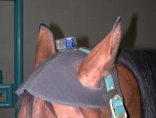 Head Sensor