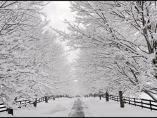 A Snowy Lane